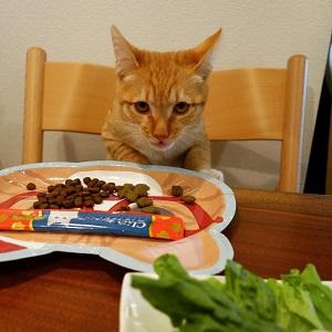 猫ごはんチュール