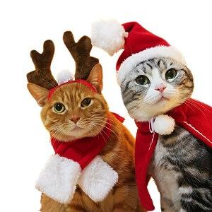 猫服サンタとトナカイ