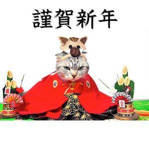 お正月の猫さま11