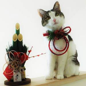 お正月の猫さま1