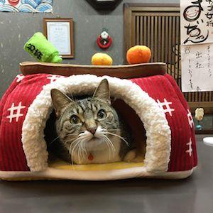 お正月のこたつ猫
