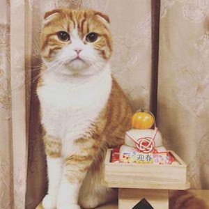 お正月の猫さま5