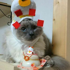 お正月の猫さま8