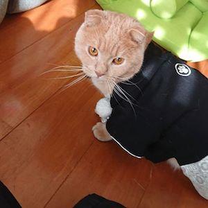 お正月の猫9