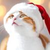 猫と楽しむクリスマス「クリスマスパーティー編」