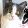 なないろ猫物語Vol.22|「モニャ」~平凡な毎日こそが幸せ