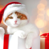 2019猫さまへ贈りたいクリスマスプレゼント~きっと喜んでくれるおすすめ12選~