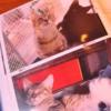 足元にいる子を幸せにする選択を〜保護猫カフェ駒猫