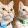 なないろ猫物語Vol.25|「ゴロー&ムサシ」~ボロボロの状態だった2匹が元気に生きているこの瞬間が幸せ