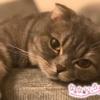 なないろ猫物語Vol.26|「うるばりん」~猫嫌いだった私を変えてくれた存在