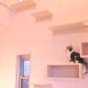 """まるで注文住宅!ねこ検定監修の一級建築士が設計した""""猫と暮らす家"""""""