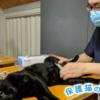 保護猫のわ通信Vol.5|TNR不妊手術を行う獣医師へインタビュー「ふー動物病院 亀田博之先生」