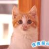 保護猫のわ通信Vol.6|動物遺棄を減らすために私たちにできること
