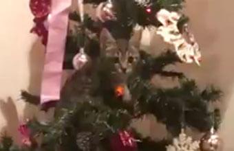 この手があったか!猫がいるお家のクリスマスツリーの正しい使い方