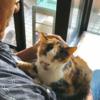 人間の身勝手な理由で手放された猫たち〜命を繋ぐ懸命な保護活動