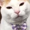 【新春癒し猫】可愛さ年中無休!20秒を無限リピートできちゃううっとり顔猫さま