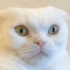 【2020】注目最新猫ヘアスタイルはこれ!#アタマタイラネコ