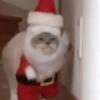 ちっこいサンタが歩いてくる~!あ、猫でした♡猫サンタ癒しプレゼントお配り中
