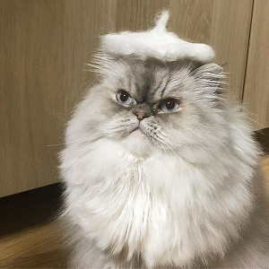 猫の毛玉ベレー