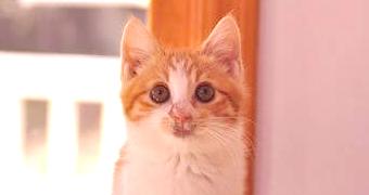 保護猫のわ通信 vol.6