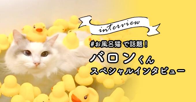 湯船に浸かる姿がインスタグラムで話題!「#お風呂猫」バロンくん