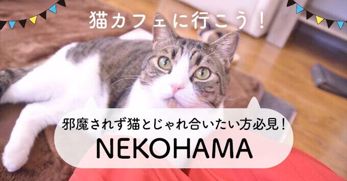 誰にも邪魔されず猫とじゃれ合いたい方必見!保護猫カフェNEKOHAMA