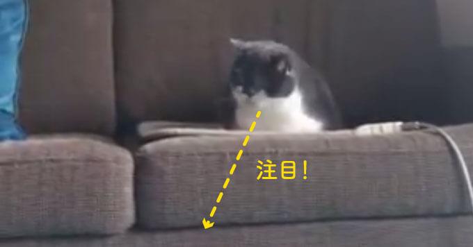 もしやお正月太り?ソファ下で「お腹つっかえ…からの液体化脱出」した猫が話題