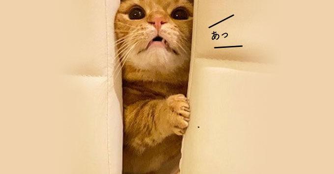 【ナイス挟まり!】挟まり猫マニアのみなさんへお届けします