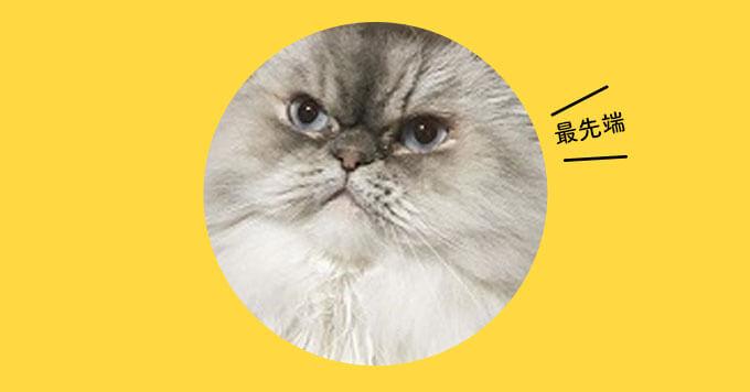 猫ファッション!2020トレンドは【毛玉ベレー】がきちゃうかも~
