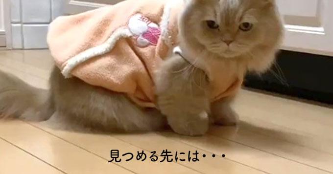 「猫さま×ちょっと懐かしいハンドスピナー」相性ぴったりと話題です