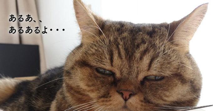 ~猫あるある~入りきれてない猫さま