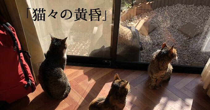 【猫さま青春中!】なぜこんなに絵になるの~夕日に赤く染まる猫のみなさん
