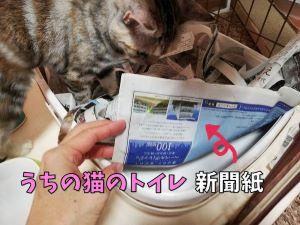 猫トイレ、新聞紙利用