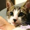 なないろ猫物語Vol.27|「富士」~保健所で殺処分寸前だった子猫を救って
