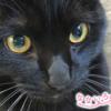 なないろ猫物語Vol.29|「くろまめのクーちゃん」~生きづらい生活環境からこの子を守るため