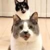 保護猫のなかには個性的で面白い子がたくさんいるんだよ♪〜くまお&こぐま母インタビュー