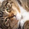ぽちゃ猫さんも愛しいけれど…猫の運動不足を解消~6つの対策~