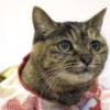 【祝成人式】長生き愛され猫さまのリメイク着物が話題!