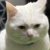 猫さまがいかに【世界の中心】にいるか分かる画像