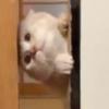 クリーム色のもふ猫さんによる【秘技!ふすま開け】が可愛いすぎる!