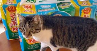 保護猫のわ通信 vol.7