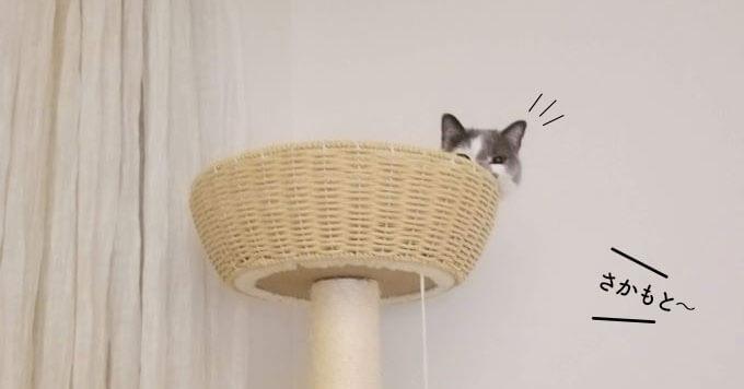 呼んだらささっと参上する猫さまが話題【その可愛さ画力あり】
