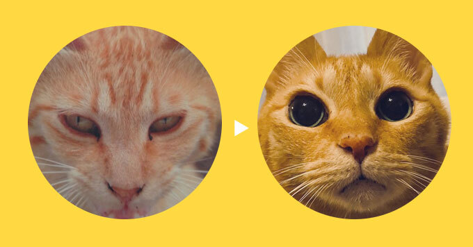 野良猫さんから【2年かかって】堂々イクメン猫さんに