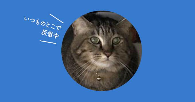 怒られた猫の哀愁だだ漏れショット~どんまい猫さん~
