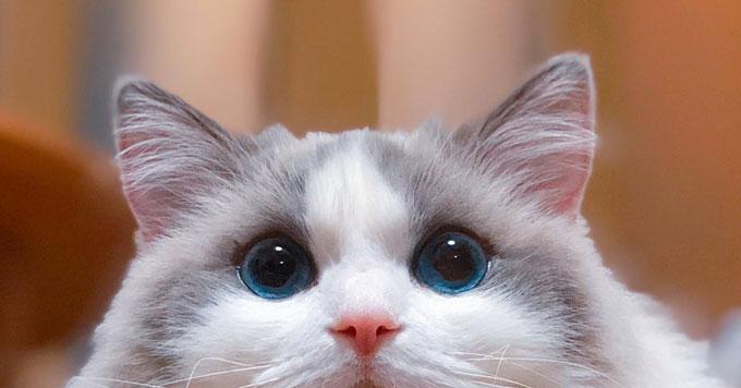 【京都のパワースポット!?】「まるで雪山!」なもふもふ猫さんが人気です