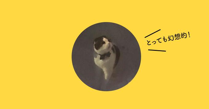 雪国の妖精ですか?「かまくら×猫」のあったかショット発見!