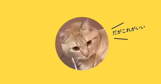 【はみだし猫】癒しのあるある動画「はみだし感」ハンパない~!