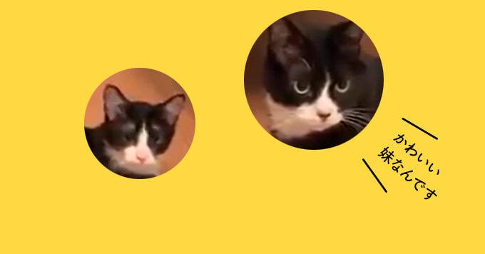 こんな優しいお兄ちゃんが欲しい~仲良しハチワレ猫兄妹が可愛いすぎる♡