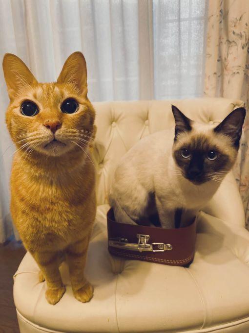イクメン猫