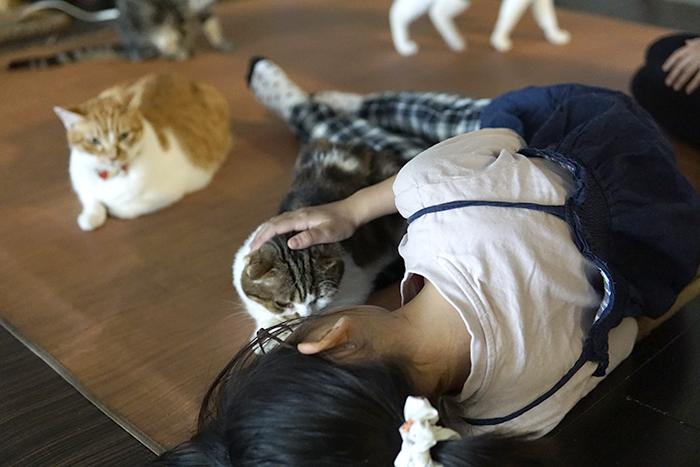 こども猫講座